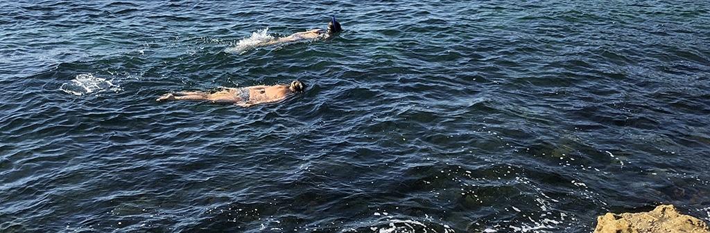 Sydney Snorkeling Snorkelers